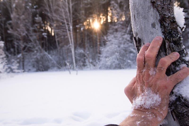 Mão dramática na neve No inverno a floresta congela povos tragédia fotografia de stock royalty free