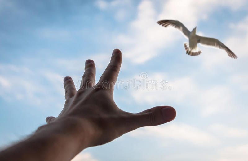 Mão e pássaro no céu. imagem de stock