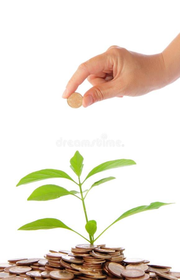 Mão e planta verde que crescem das moedas imagens de stock