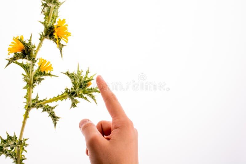 Mão em contato com flores imagem de stock