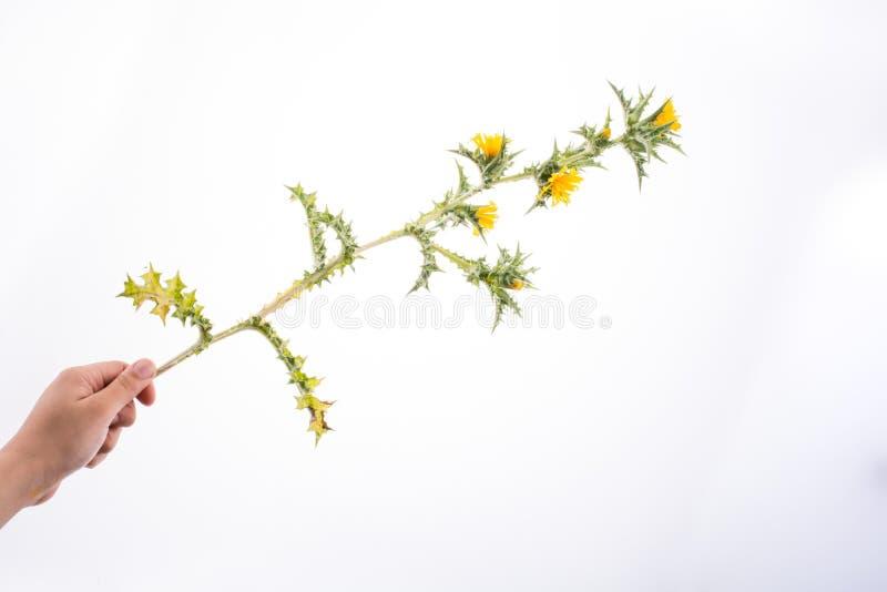 Mão em contato com flores imagens de stock