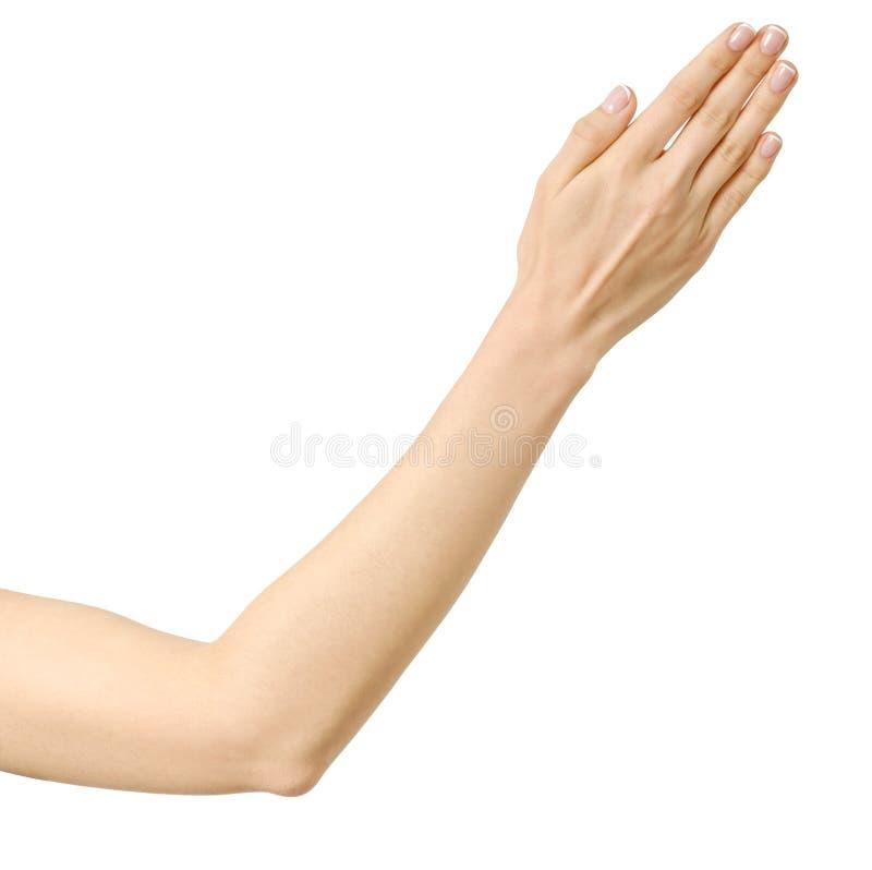 Mão esticada da mulher isolada foto de stock