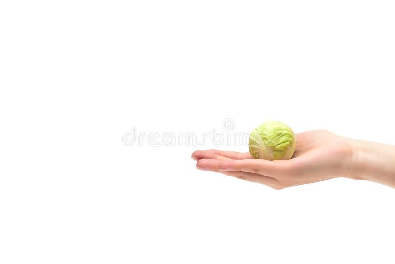 Mão fêmea em um fundo branco que guarda uma cabeça pequena da couve na palma, dieta, vegetarianismo, nutrição apropriada, isolado fotografia de stock