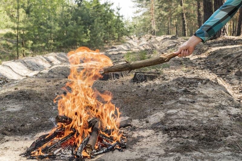 A mão fêmea joga a lenha no fogo imagem de stock