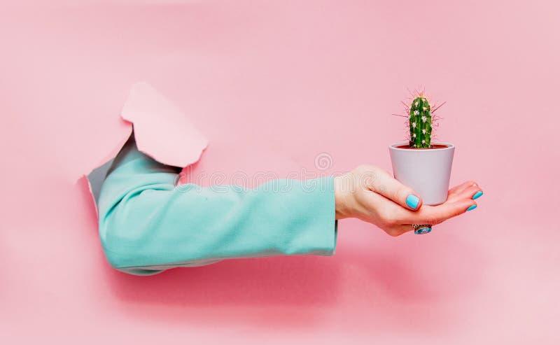 Mão fêmea no casaco azul clássico com o cacto no potenciômetro fotos de stock royalty free