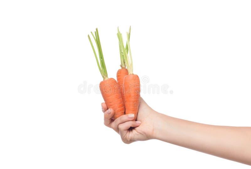 Mão fêmea que guarda cenouras frescas e maduras imagens de stock royalty free