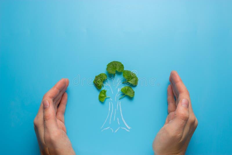 Mão fêmea que guarda o esboço da árvore foto de stock royalty free