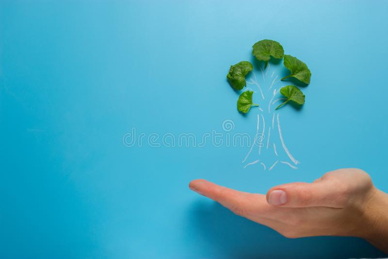 Mão fêmea que guarda o esboço da árvore imagens de stock