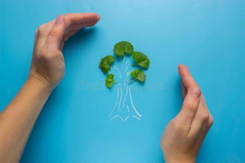 Mão fêmea que guarda o esboço da árvore imagem de stock royalty free