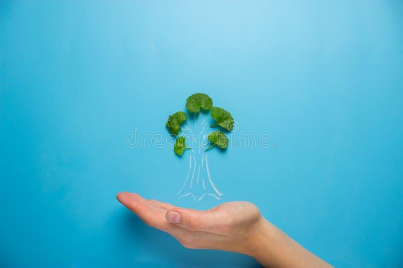 Mão fêmea que guarda o esboço da árvore fotografia de stock