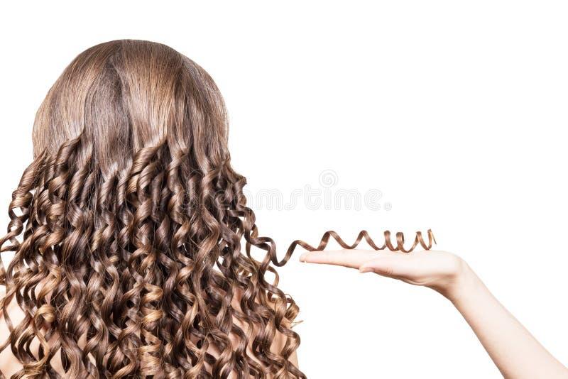 Mão fêmea que mantém a costa do cabelo marrom ondulada isolada no fundo branco imagem de stock royalty free