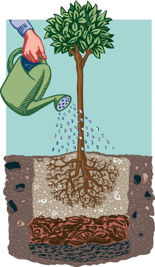 Mão fêmea que molha uma planta ilustração do vetor