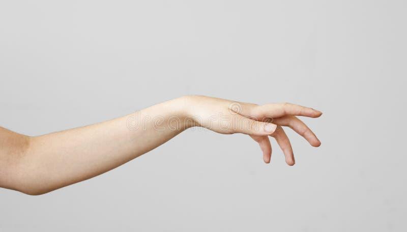 Mão fêmea que toca no fundo cinzento imagem de stock