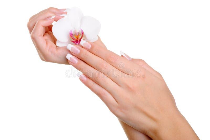 Mão fêmea well-groomed bonita com flor fotografia de stock
