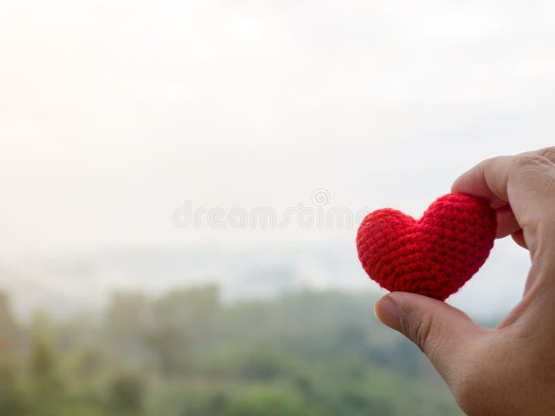 A mão guarda o coração vermelho Floresta, árvores verdes e montagem enevoada fotos de stock royalty free