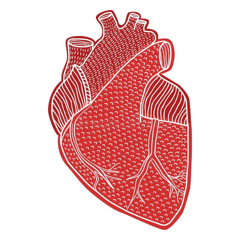 Mão humana do coração tirada isolada no os fundos brancos ilustração royalty free