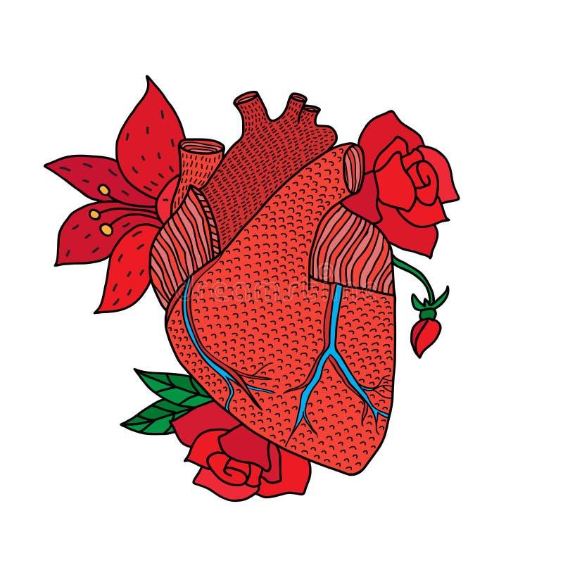 Mão humana do coração tirada isolada no os fundos brancos ilustração do vetor