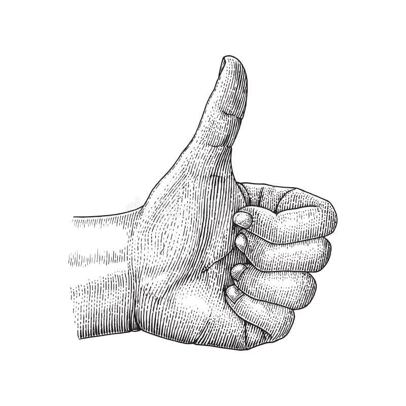 A mão humana gosta de tirar a ilustração da gravura do vintage ilustração royalty free