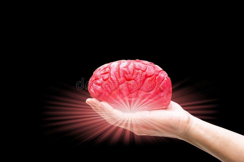 Mão humana que guarda o vermelho do cérebro na memória imagem de stock