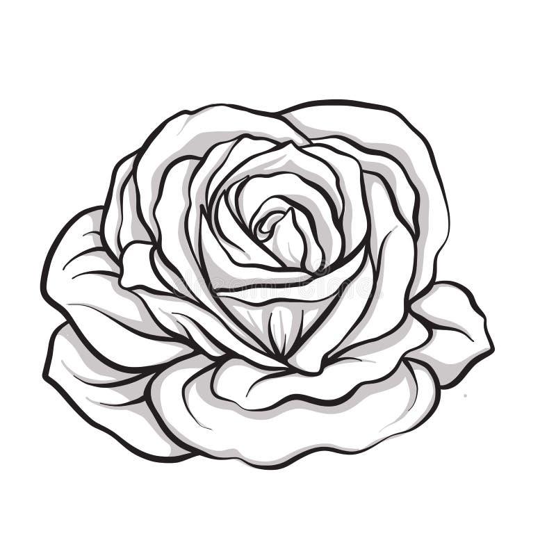 Mão isolada flor do esboço de Rosa tirada Linha conservada em estoque illus do vetor ilustração do vetor