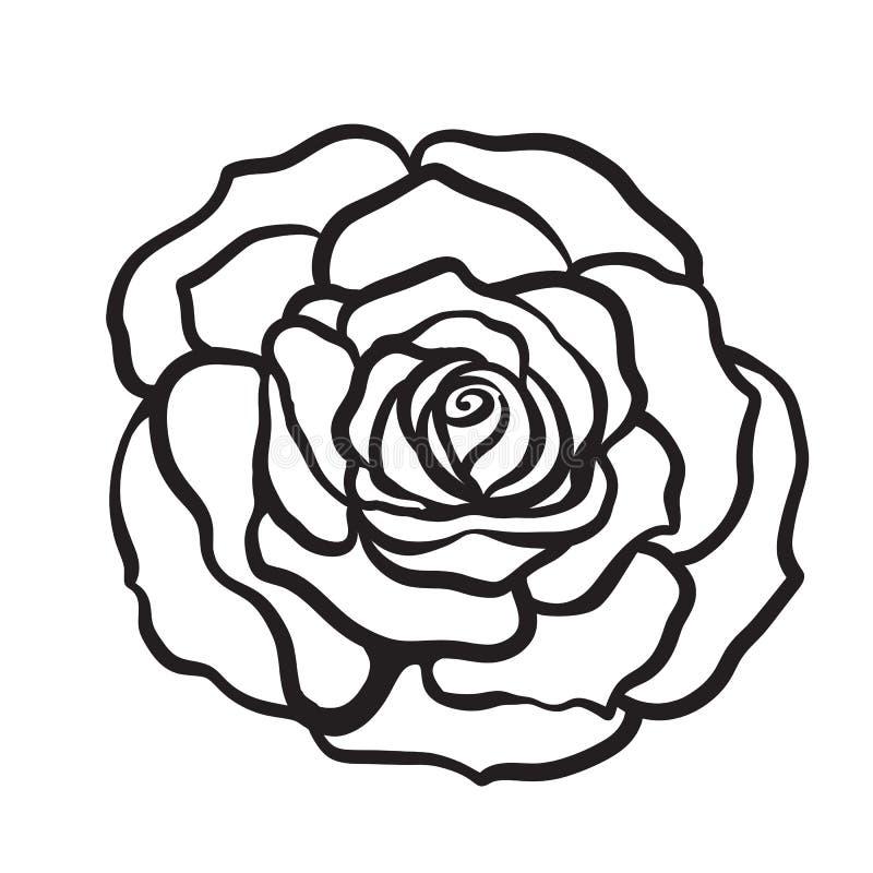 Mão isolada flor do esboço de Rosa tirada Linha conservada em estoque illus do vetor ilustração royalty free