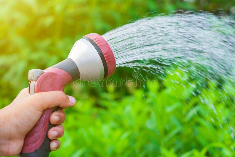 Mão masculina com a arma de pulverizador que molha um jardim vegetal em um fundo de plantas verdes fotografia de stock