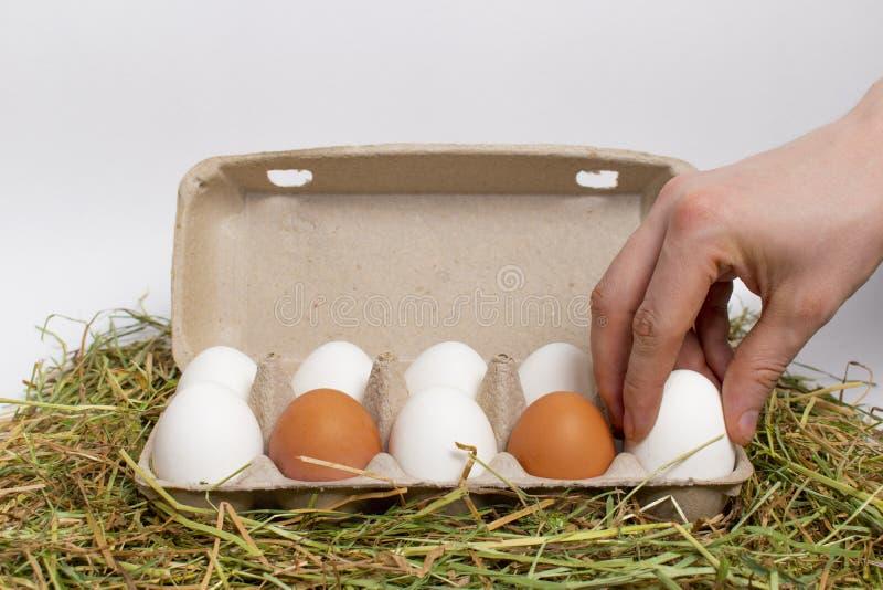 A mão masculina toma o ovo fora da caixa dos ovos no feno isolate fotografia de stock