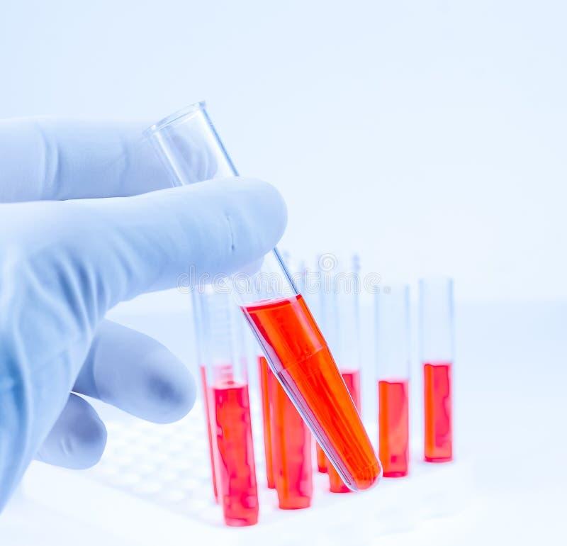A mão na luva azul médica está guardando o tubo de ensaio com líquido vermelho no laboratório imagens de stock royalty free