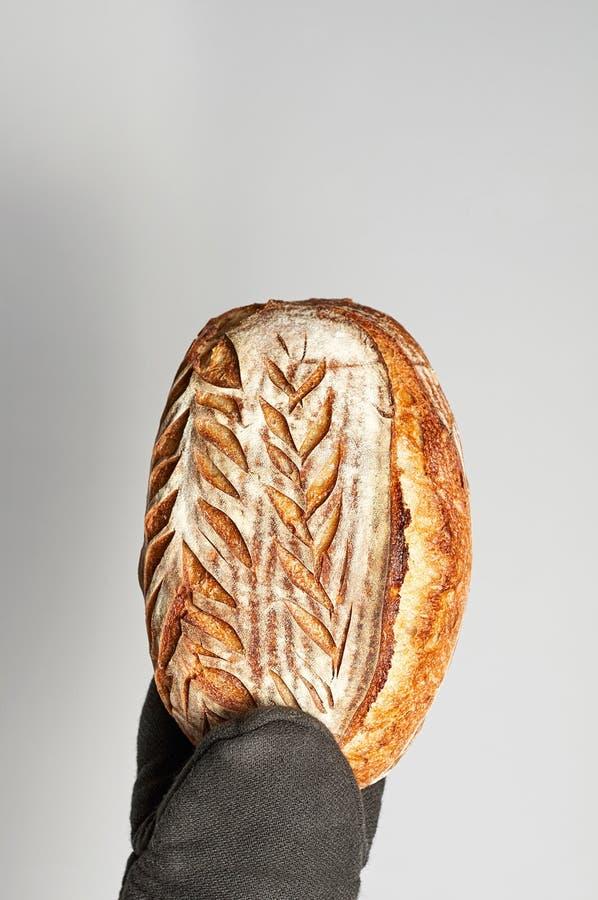 Mão na luva do forno que guarda o pão inteiro recentemente cozido da grão do artesão em um fundo cinzento imagens de stock