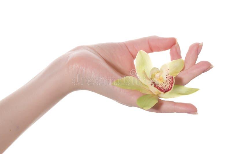 Mão na posição da ioga com a flor incluida imagem de stock