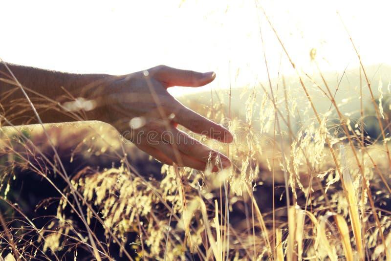 Mão no sol