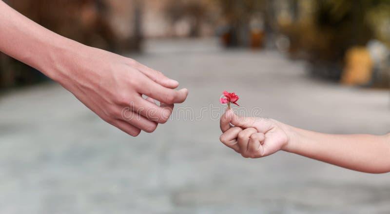 Mão pequena que guarda a flor fotografia de stock royalty free