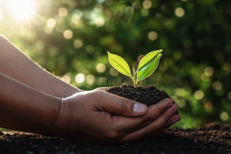 m?o que guarda a ?rvore pequena para plantar na luz da manh? Dia da Terra do mundo do verde do conceito imagens de stock royalty free
