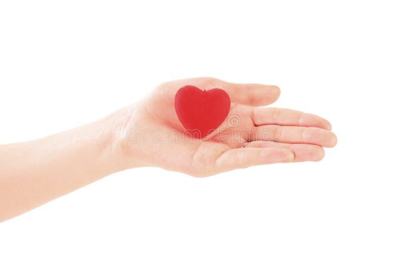 Mão que guarda o coração vermelho no fundo branco Dia do `s do Valentim fotografia de stock
