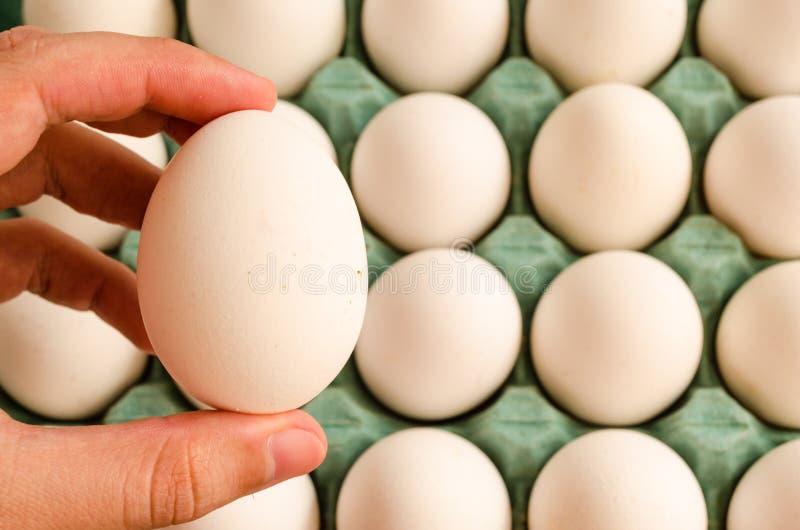 Mão que guarda um ovo branco e no fundo uma caixa verde completa do ovo fotos de stock