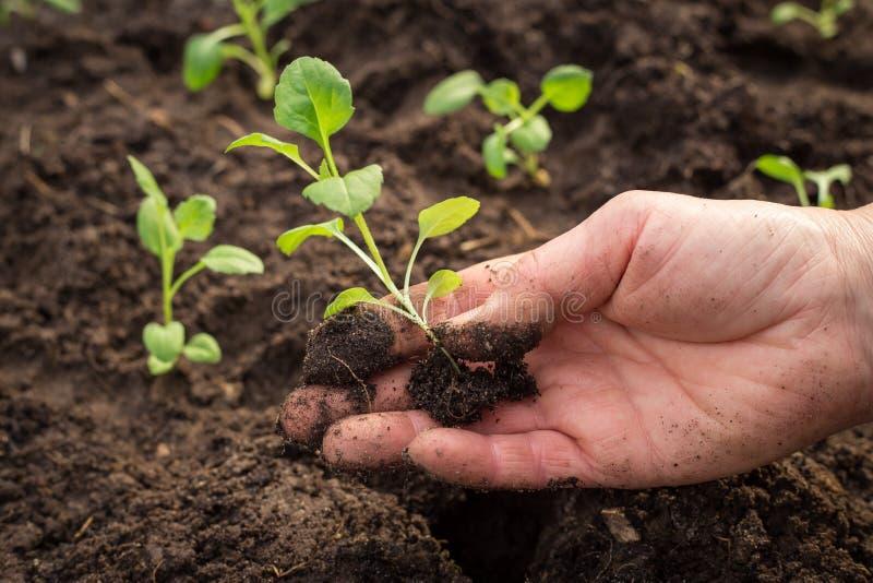 Mão que planta a planta nova na terra fotos de stock royalty free