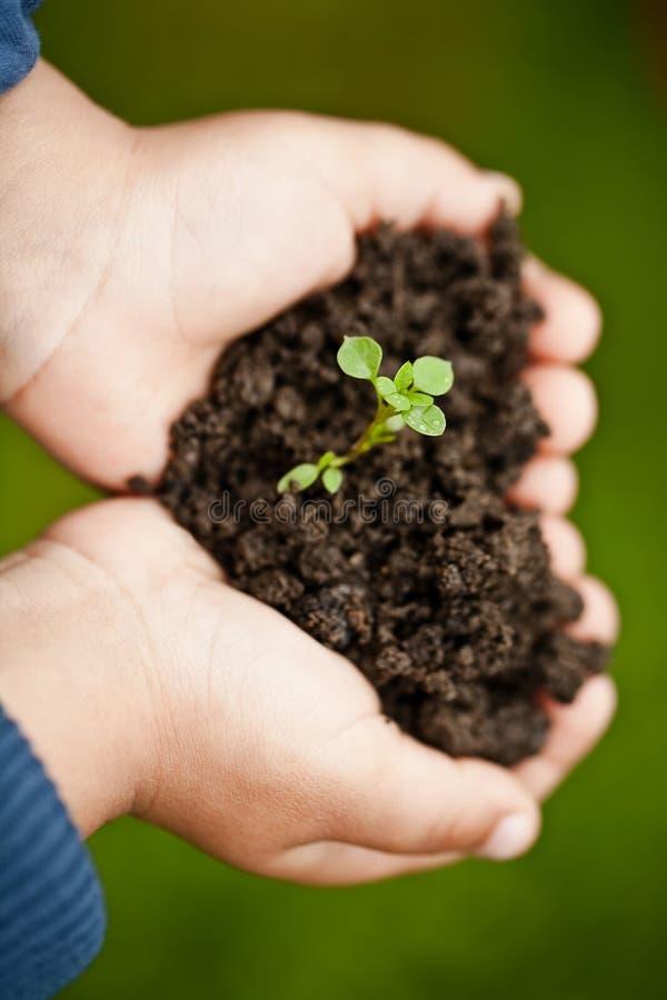 Mão que prende uma planta nova fresca fotos de stock royalty free