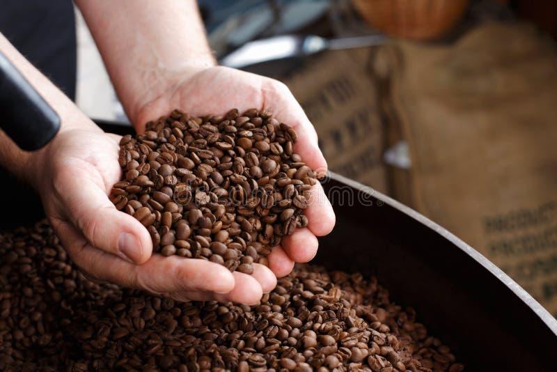 Mão que remove os feijões de café roasted fotografia de stock