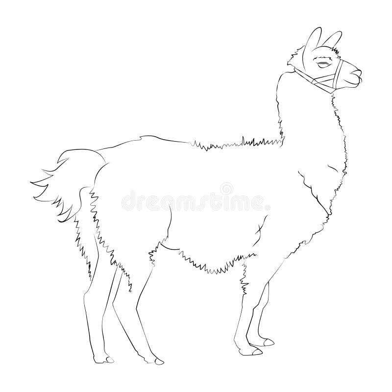 Mão realística bonita um esboço tirado da alpaca ou da Lama Ilustração do vetor ilustração stock
