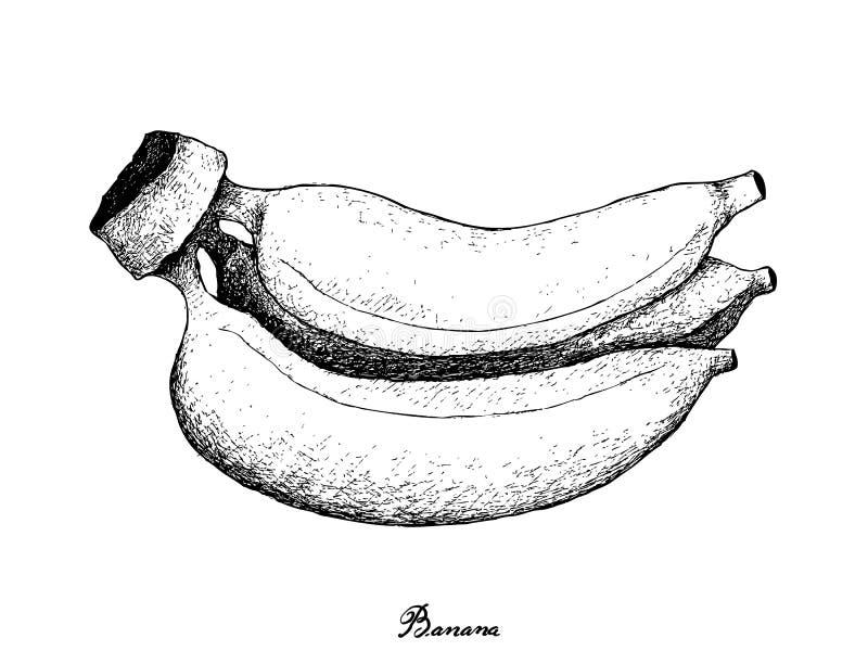 Mão tirada da banana dourada madura fresca ilustração royalty free