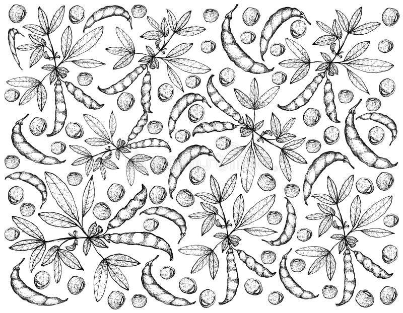 Mão tirada da ervilha de pombo e do fundo das plantas do Cajan do Cajanus ilustração stock