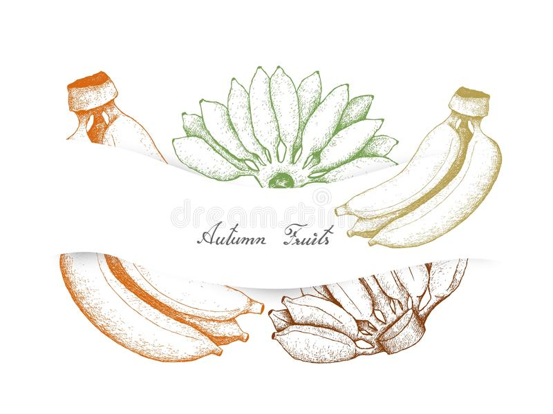 Mão tirada de Autumn Fruits, bananas maduras ilustração do vetor