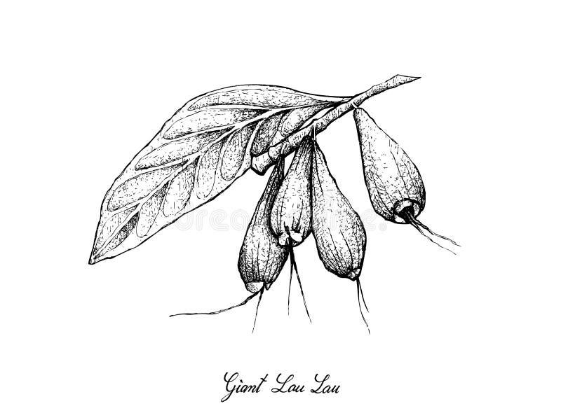 Mão tirada de Lau Lau gigante no fundo branco ilustração royalty free