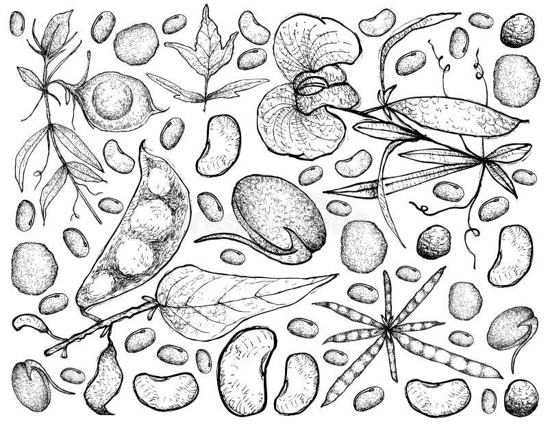 Mão tirada de vegetais Podded em um fundo branco ilustração royalty free