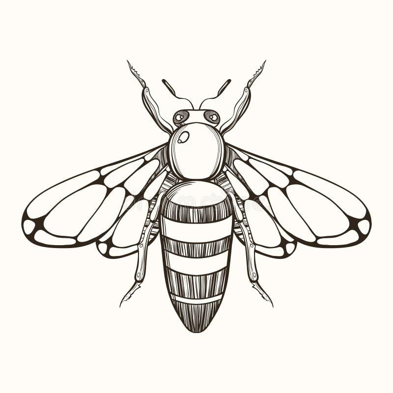 Mão tirada gravando o esboço da abelha Ilustração do vetor para o tat ilustração do vetor