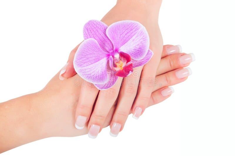 Mão Well-groomed da mulher imagem de stock royalty free