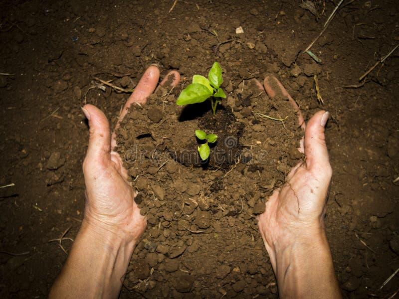 Mãos à terra verdes fotografia de stock