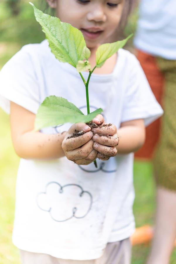 Mãos asiáticas da menina que guardam a planta pequena para preparar-se para a plantação fotos de stock