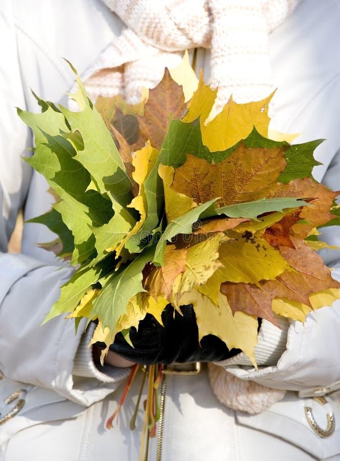 Mãos com as folhas do amarelo do bordo fotografia de stock