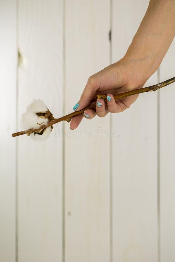 Mãos com os pregos bonitos no fundo de madeira branco imagem de stock royalty free